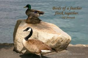 Spiritual blog - Birds
