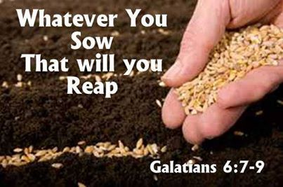 Spiritual Blog - Good Seed
