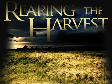 Spiritual Blog - Harvest