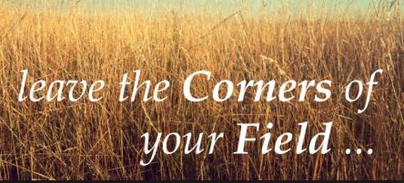 Spiritual Blog - Corners of Your Fields