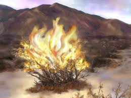 Spiritual Blog - Burning Bush