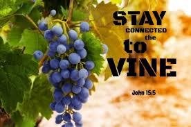 Spiritual Blog - Vine
