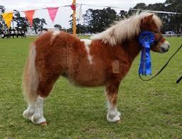 Spiritual blog - Show Pony