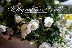 Spiritual Blog - Why Not