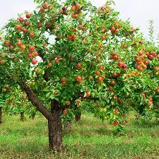 Spiritual Blog - Fruit Trees