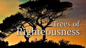 Spiritual Blog - Trees